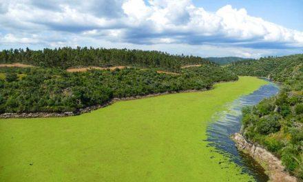 """<span class=""""entry-title-primary"""">Algas diminuem qualidade da água do Tejo ibérico</span> <span class=""""entry-subtitle"""">Aumenta níveis de poluição no Tejo internacional</span>"""