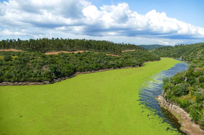 """<span class=""""entry-title-primary"""">Las algas disminuyen la calidad del agua del Tajo ibérico</span> <span class=""""entry-subtitle"""">Aumentan los niveles de contaminación en el tramo del Tajo internacional</span>"""