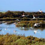 Promueven la compatibilidad de la acuicultura en espacios protegidos como la Bahía de Cádiz y la Ría Formosa