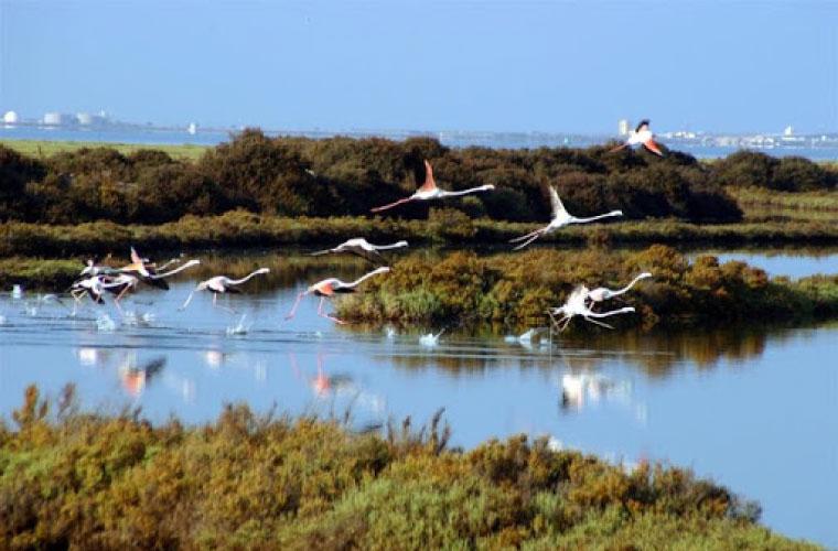 """<span class=""""entry-title-primary"""">Promovem a compatibilidade da aquacultura com espaços protegidos como a Baía de Cádiz ou a Ría Formosa</span> <span class=""""entry-subtitle"""">Estas ferramentas foram desenvolvidas, em Março, pelo projecto Aqua&Ambi</span>"""