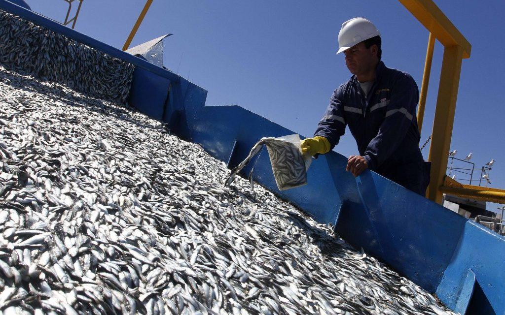 """<span class=""""entry-title-primary"""">Espanha e Portugal duplicam o limite permitido da pesca da sardinha ibérica</span> <span class=""""entry-subtitle"""">Este aumento beneficiará principalmente as redes de cerco como aquelas que temos na Cantábria e no Noroeste</span>"""