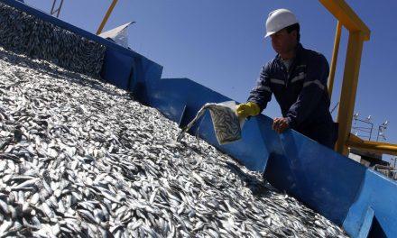 """<span class=""""entry-title-primary"""">España y Portugal duplican el límite permitido de pesca de sardina ibérica</span> <span class=""""entry-subtitle"""">Este incremento beneficiará principalmente a los barcos de cerco del Cantábrico y Noroeste</span>"""