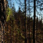 Repsol impulsiona projectos de reflorestação em Espanha, Portugal e América Latina