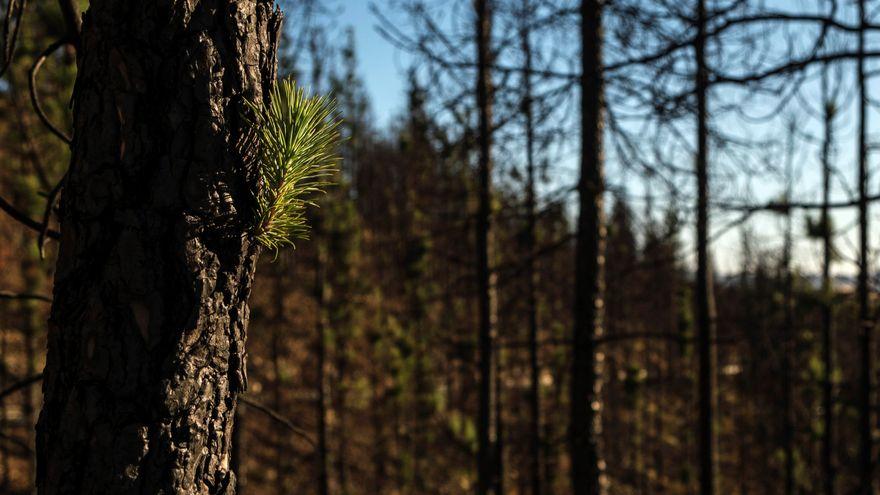 Repsol impulsa proyectos de reforestación en España, Portugal y Latinoamérica