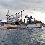 Mais sardinhas poderão ser pescadas em águas ibéricas